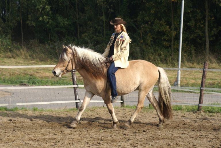 Curly Stal Yvonne - onze paarden
